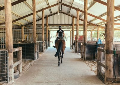 equine-training1