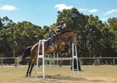equine-training10