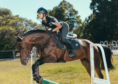 equine-training11