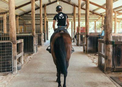 equine-training2
