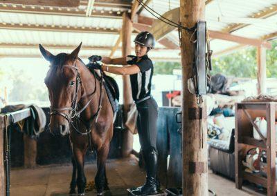 equine-training3