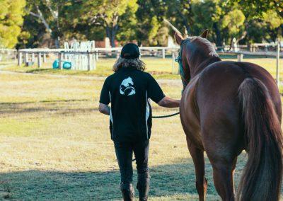 equine-training4