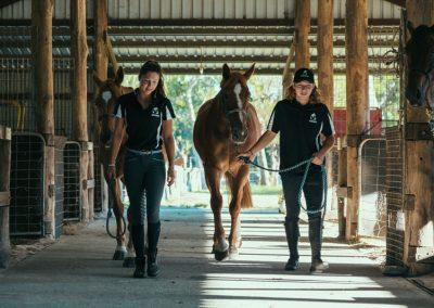 equine-training5