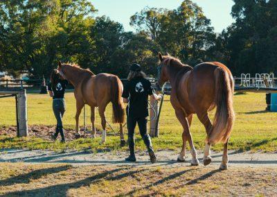 equine-training6