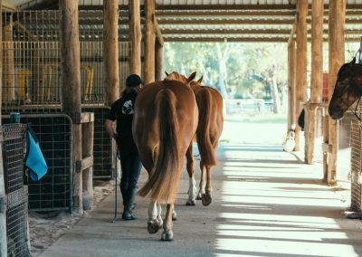 equine-training7