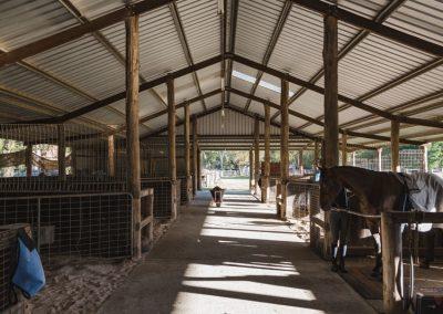 topline-equine-training-facilities